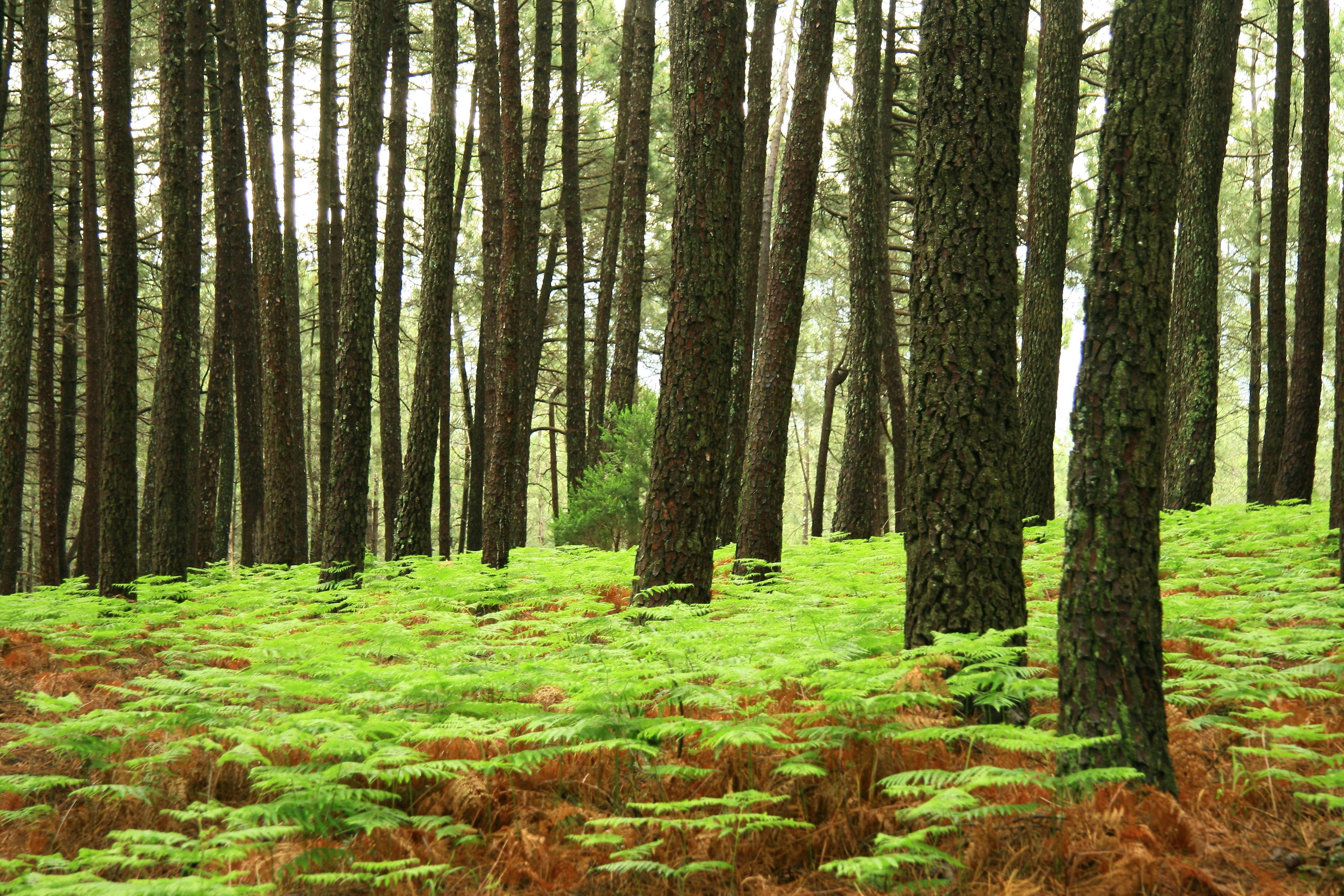 Bosques de El Valle del Tiétar - TiétarTeVe