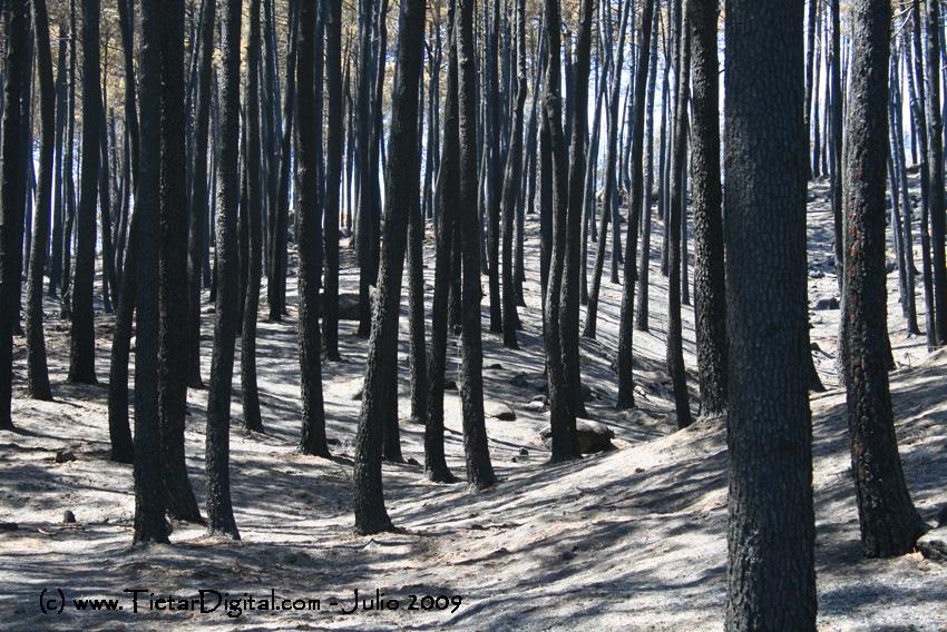 Nuestros bosques quemados en el Incendio del Valle del Tiétar del 2009