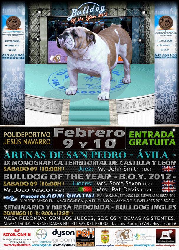IX Monográfica de Castilla y León sobre el Bulldog Inglés y Bulldog of the Year - Arenas de San Pedro