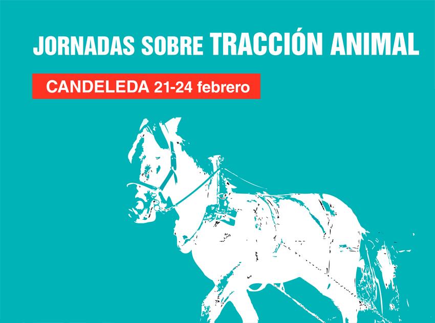 Jornadas sobre Tracción Animal en Candeleda