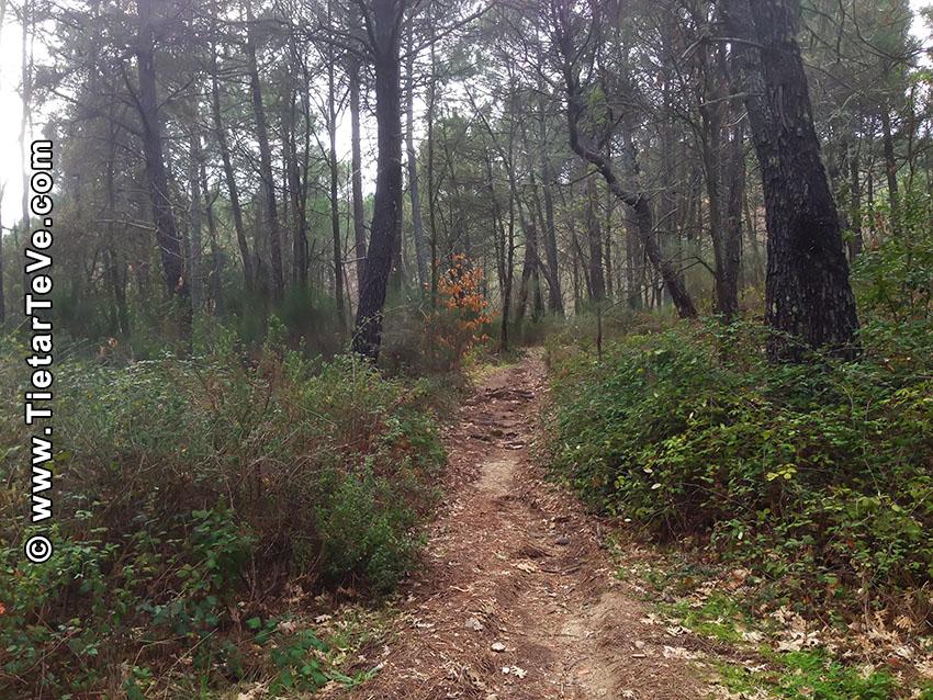 Ruta San Pedro - Ceubia - La Parra - Arenas de San Pedro - TiétarTeVe