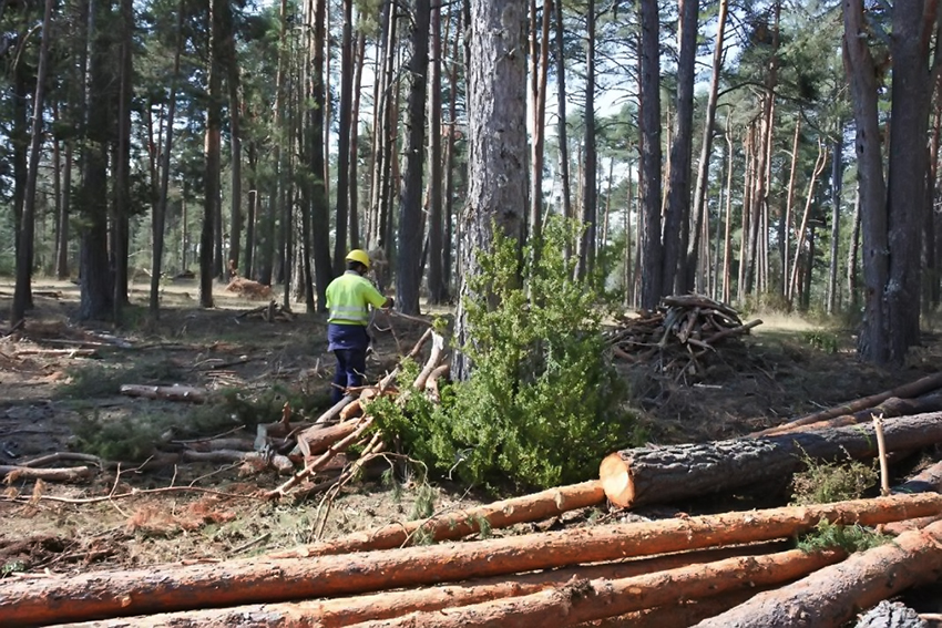 Tratamientos Selvicolas - Incendios Forestales