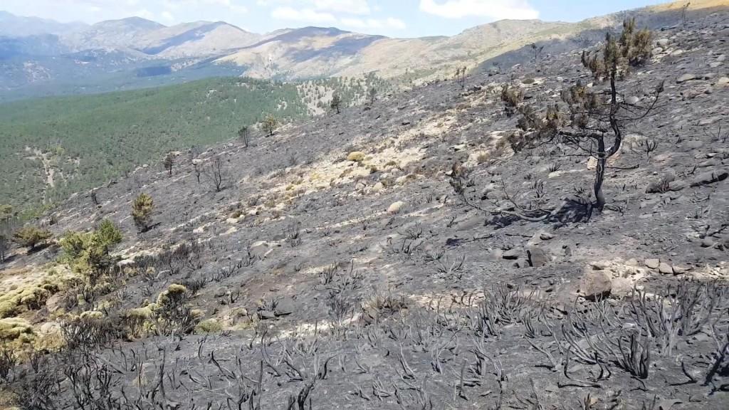 2019-07-14 Zona afectada incendio Sotillo de La Adrada - TiétarTeVe