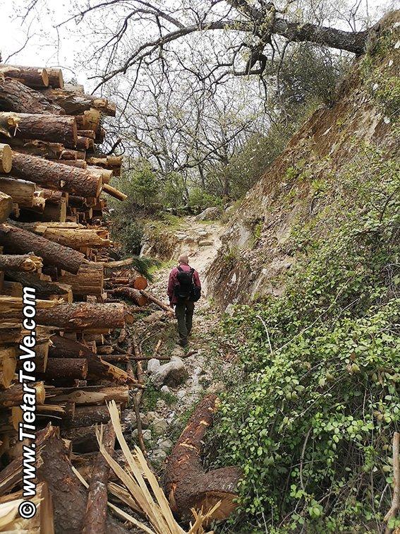 Único problema puntual de señalización de la ruta, quedando el sendero detrás de los troncos