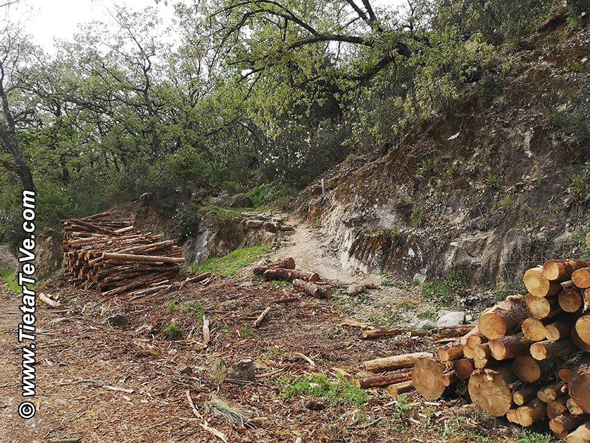Senda de Pescadores de Candeleda despejada de troncos.