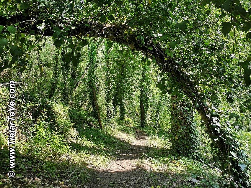 Punto 7 - Puente de tronco de árbol