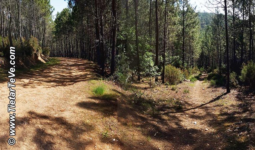 Punto 11 - Cruce del sendero con la pista forestal