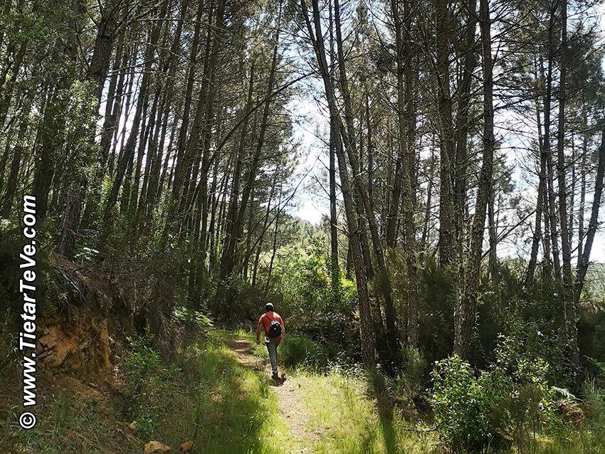 Entre el punto 12 y el 13 - Camino de vuelta de la Ruta del Río Ramacastañas