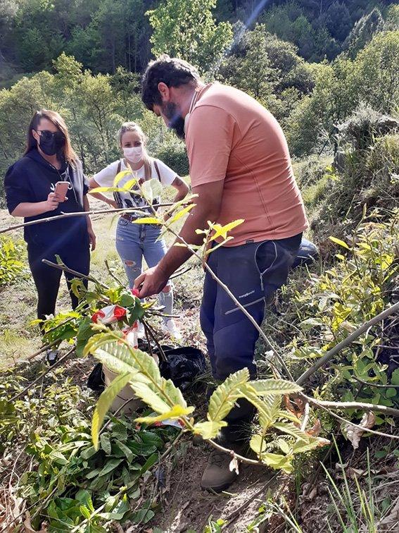 Curso cultivo de castaño para la producción de fruto en El Hornillo